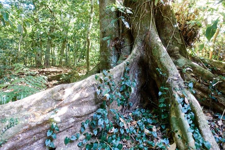 Bottom of large tree