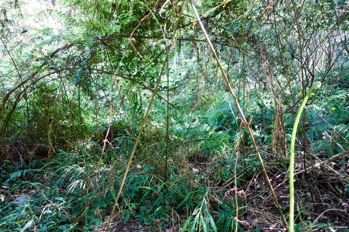 Overgrown, jungle-like area next to small unseen stream