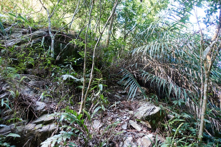 Looking up at a barely discernible trail - lots of plants - steep