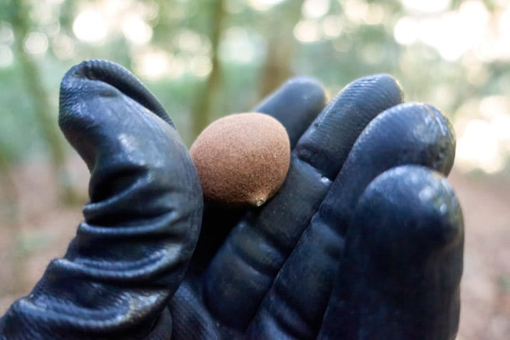 Black gloved hand holding small brown fruit