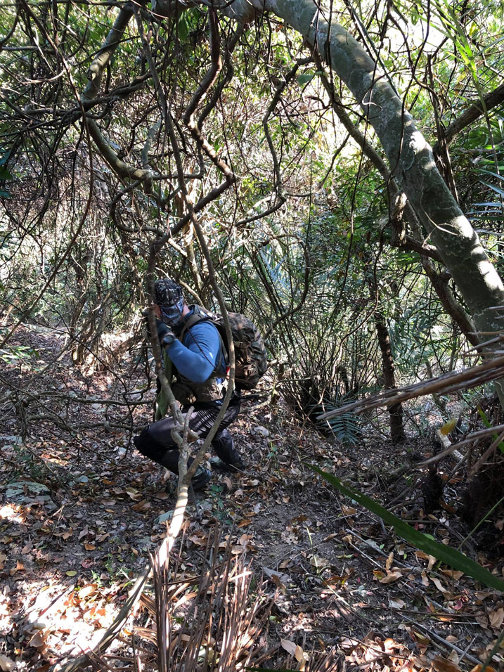 Man in blue shirt climbing down mountainside - lots of trees and vines