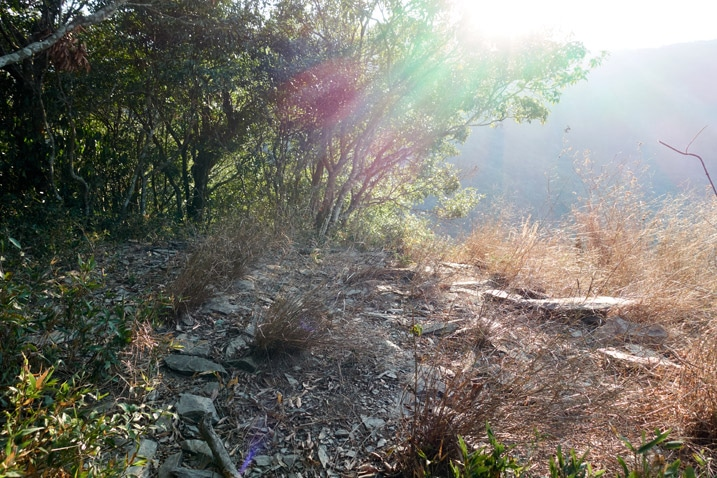 Open area on top of small peak - trees to the left - sun shining down