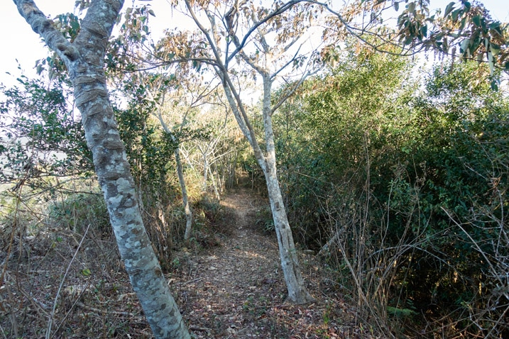 Ridge trail with trees on either side