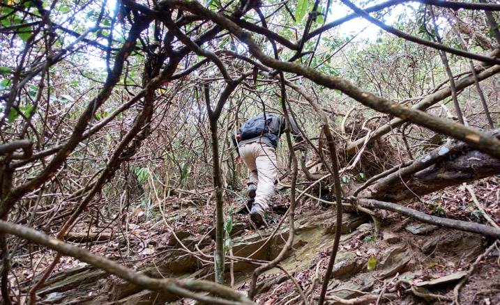 Man bushwhacking through jungle - lots of trees and vines - man in middle