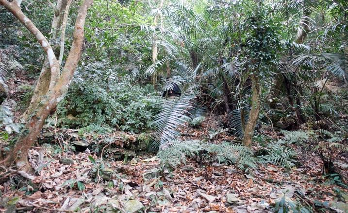 Jungle overgrowth - man hidden within