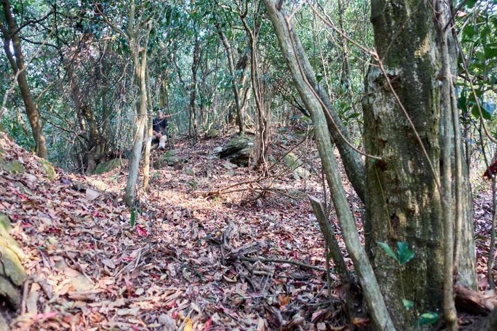 Mountain ridge - many trees - dead leaves on ground - man resting