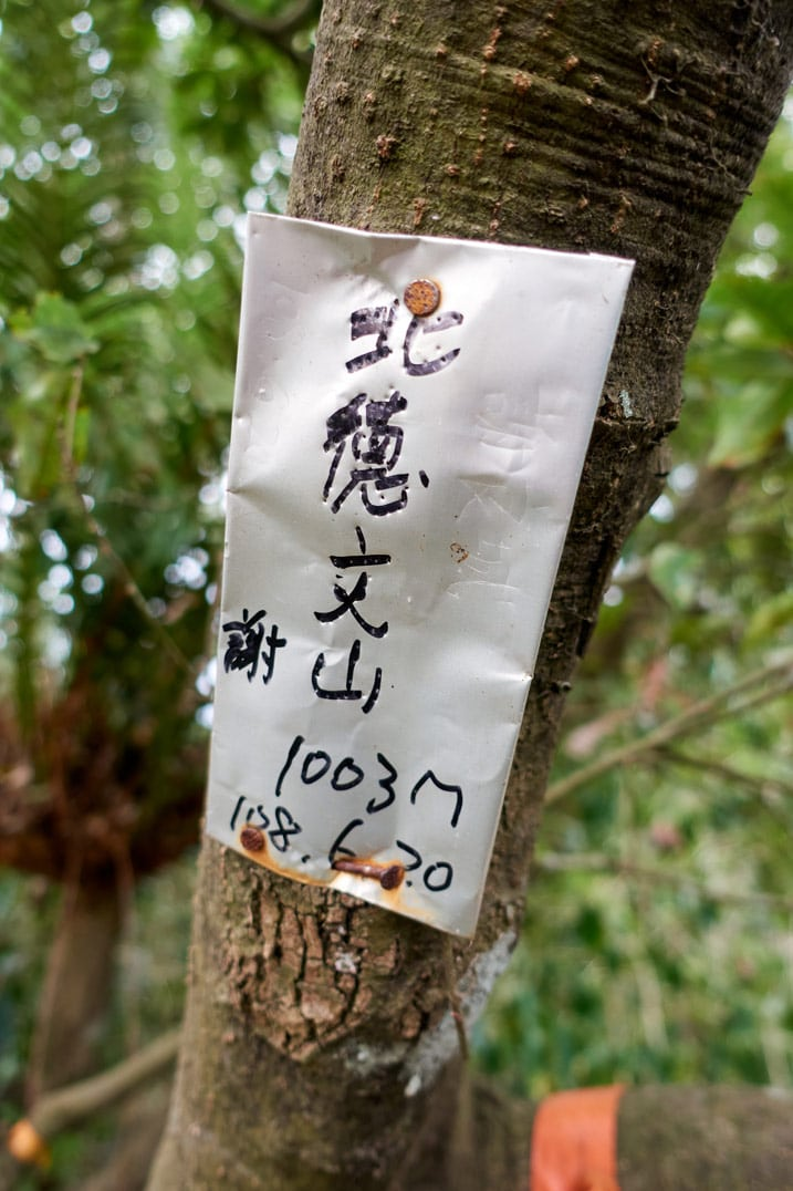 Closeup of metal sign attached to tree - Chinese writing on sign in black ink