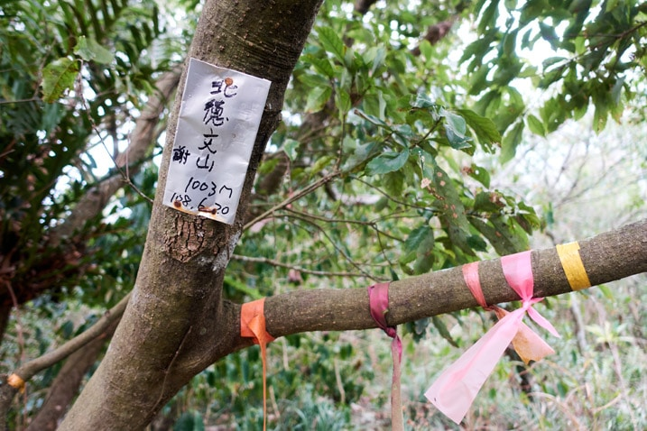 Ribbons tied to tree branch - rectangular metal sign attached to tree - Chinese writing on sign