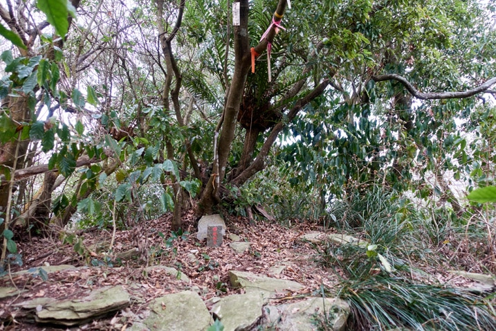 BeiDeWenShan - 北德文山 peak - trees in background - triangulation stone and some rocks