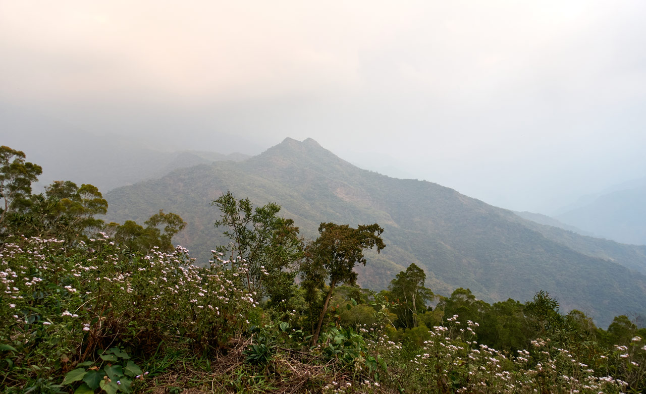 Landscape picture of mountains in fog/clouds and vegetation in foreground